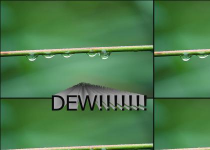 DEW!!!!!