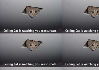 Ceiling Cat...