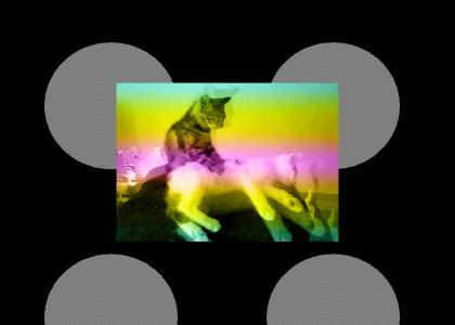Rainbow Cat Epilepsy