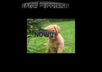 RAGE PUPPIES NOW!!!