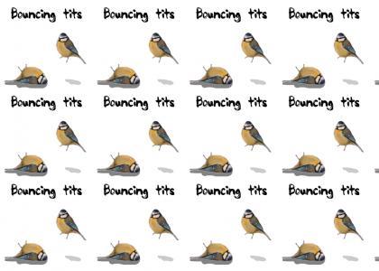 Titfish likes bouncing tits