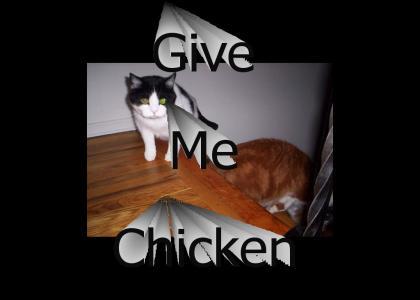 Arista cats