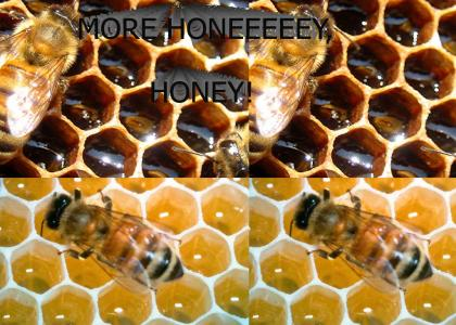 MORE HONEY, HONEY!