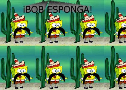 iBOB ESPONGA!