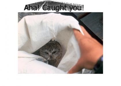 YA RLY OWL CAPTURED!!!...O RLY?...NO WAI!!!