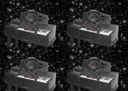 catonamagnuschordorganinspace