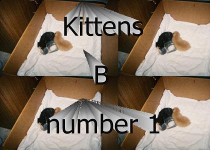 kittensRdaBomb
