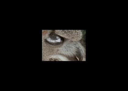 Owls have rly good eyesight