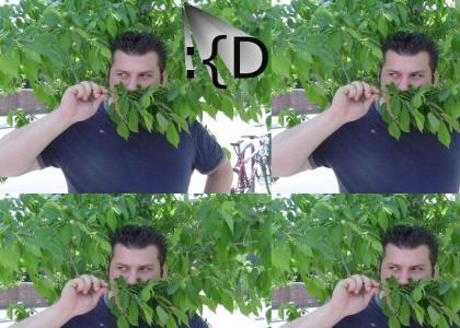treestache!
