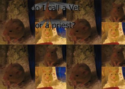 My Hamster has Stigmata