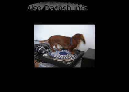 Weiner Dog Rides Spinnaz