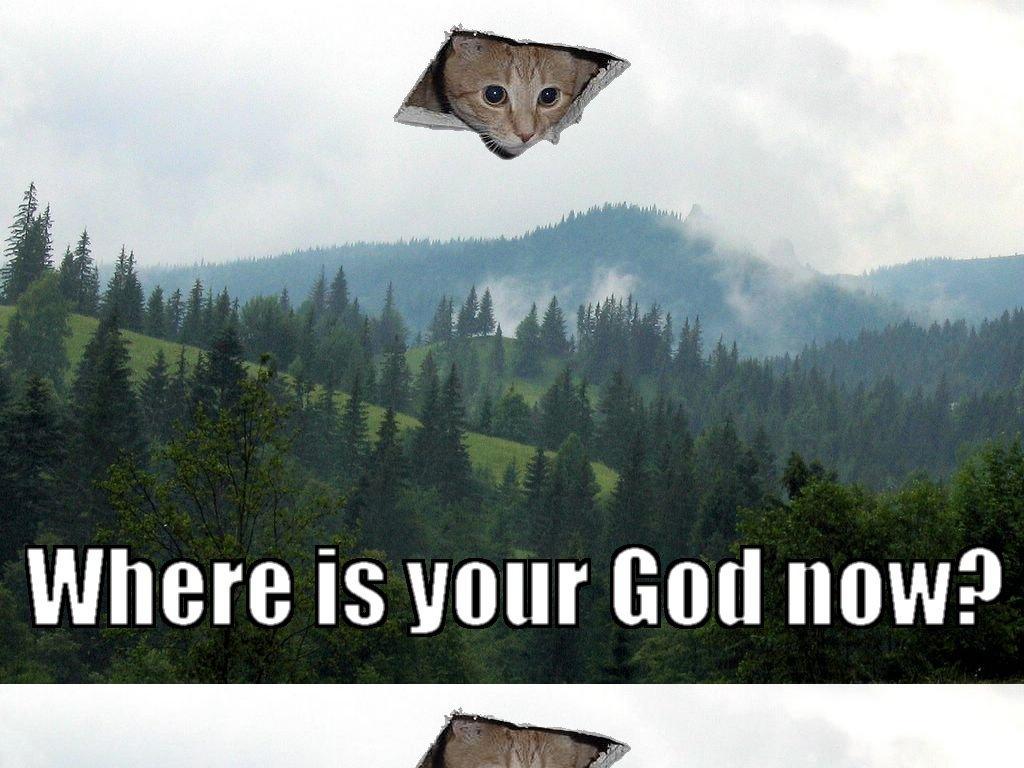 catsgods