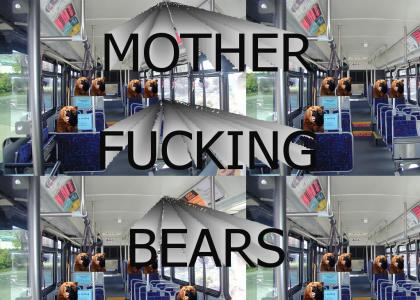 Bears on a Bus