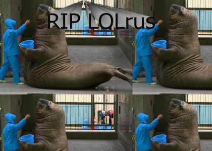 RIP LOLrus. You were truly a candle in the wind.