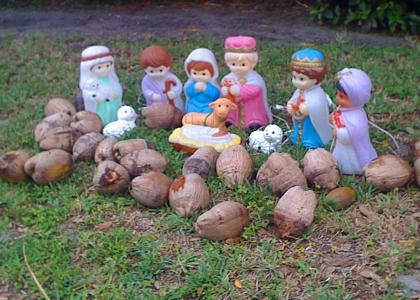 STUFFISEETMND: Holy Coconuts!