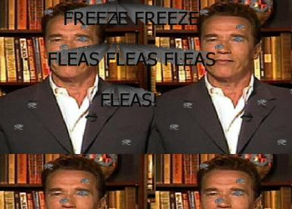 Arnold hates fleas