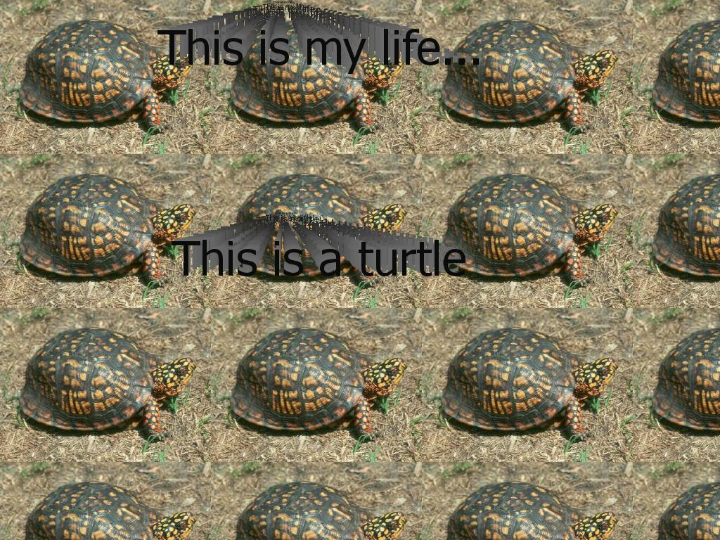 turtleafi