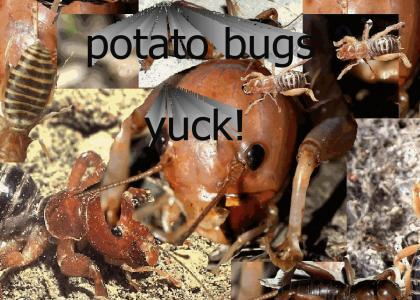 potato bugs yuck!