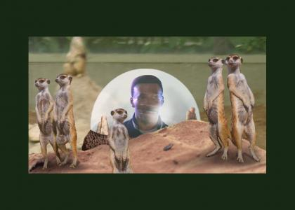 Eddie Watches Meerkats