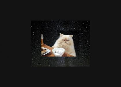 Table Cat in Space