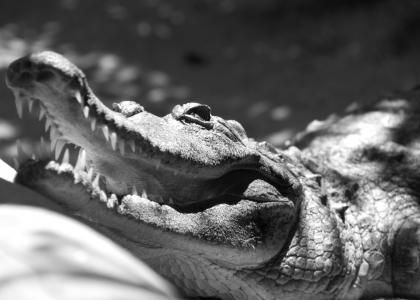 crocodile site