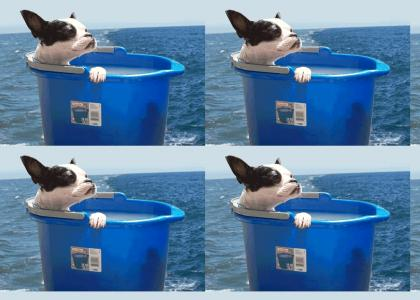 Bucket Dog is Lost