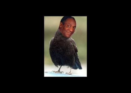 Cosby Crow