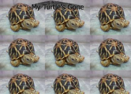 My Turtle's Gone