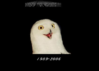 Tribute to ORLY Owl (Updated)