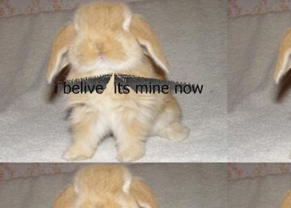 funny bunny chinning