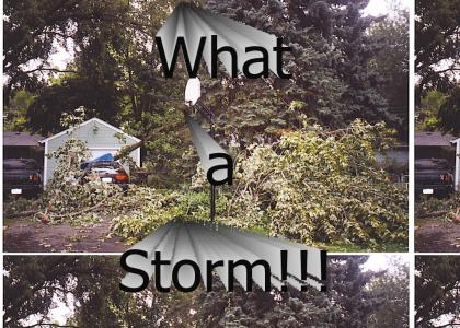MN Storm Aftermath