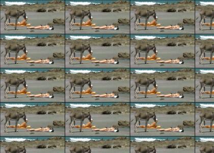 Donkey has No Class