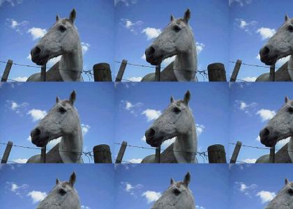 I miss my pony