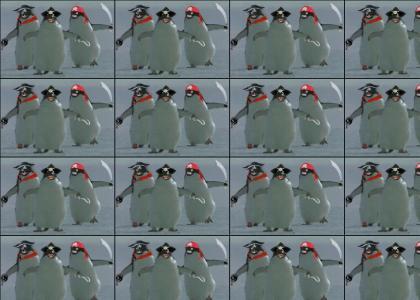 Pirate Penguins.