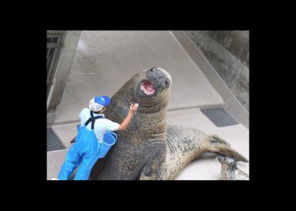 Walrus...