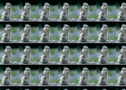 Squirrel Plays Harmonica