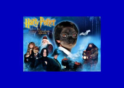 kitty harry potter?? no wai