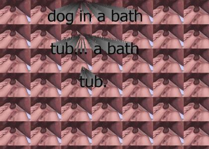 dog in a bathtub...