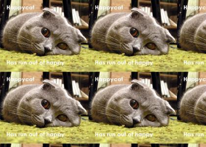 Happy cat has REALLY run out of happy