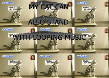 JAMAICAN STANDING CAT