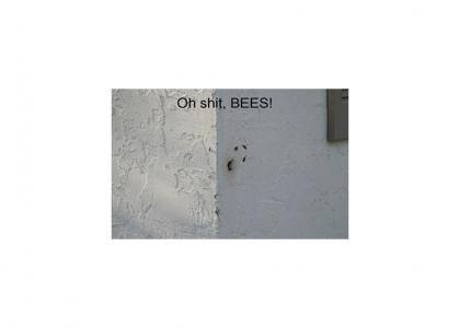 War on Bees