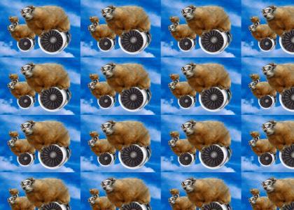 Marmot Squadron