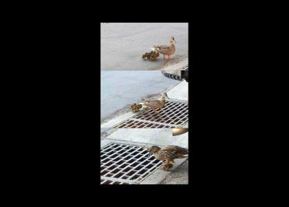 Poor Duck