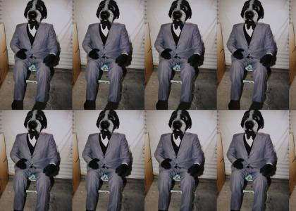 DOG IN A SUIT!