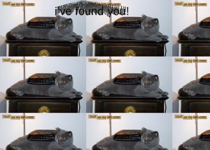Where is Happy Cat