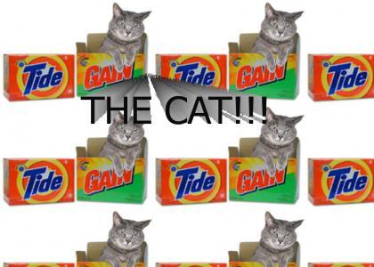 Detergent, detergent...THE CAT!