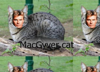 It's MacGyver cat!