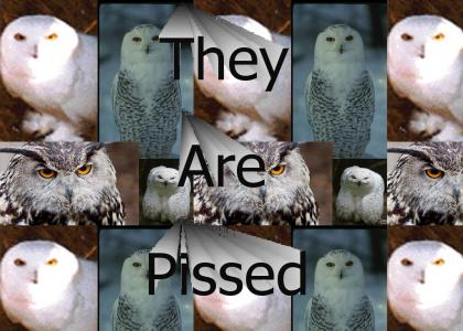 The Owls Disapprove