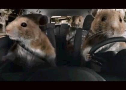 rodents rollin'