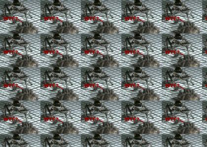 Ragtime Spider
